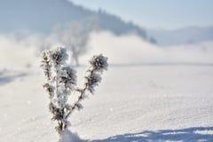 carpathians świeża futerka krajobrazu śniegu drzew Ukraine zima Obraz Stock