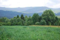 carpathians βουνά Στοκ Φωτογραφία