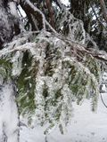 Carpathians εγκαυμάτων χειμώνας Στοκ Εικόνα