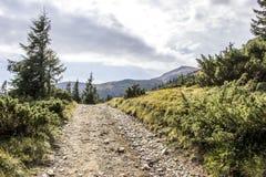 carpathians 免版税图库摄影