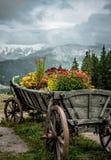 carpathians Стоковые Изображения