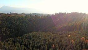 Εναέρια άποψη του ελικοειδούς τοπίου δρόμων και βουνών carpathians φιλμ μικρού μήκους
