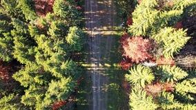 Εναέρια άποψη της μετακίνησης των οχημάτων σε έναν δρόμο βουνών carpathians r φιλμ μικρού μήκους