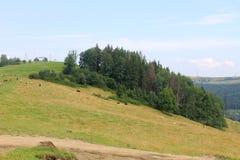 carpathians Royaltyfria Bilder