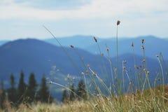 carpathians Fotografie Stock
