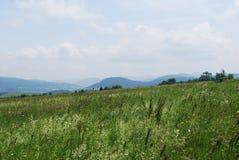 carpathians Στοκ Εικόνα