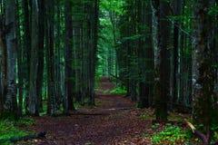 carpathians Royaltyfria Foton