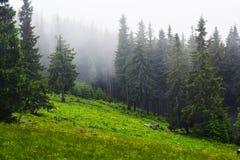 carpathians Royaltyfri Foto