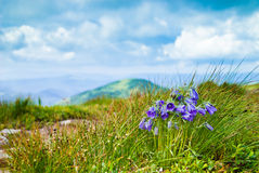 Carpathians bells Royalty Free Stock Images