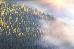 Carpathians and fog. After the rain, the green coniferous spruce forests and pastures in the Alpine zone in the Carpathians are covered with a sea of fog, the Stock Photography