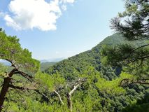 Carpathians i sommar Arkivfoton