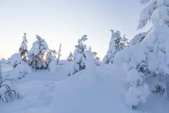 carpathians krajobrazowa gór zmierzchu Ukraine zima Obrazy Stock