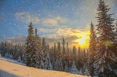 carpathians krajobrazowa gór zmierzchu Ukraine zima Zdjęcia Royalty Free