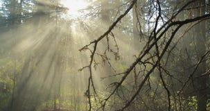 carpathians lekki olśniewający słońca drzew Ukraine drewno zdjęcie wideo