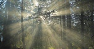 carpathians lekki olśniewający słońca drzew Ukraine drewno zbiory wideo
