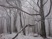 Carpathians misteriosi Fotografia Stock Libera da Diritti