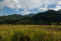 Carpathians mountain meadow Royalty Free Stock Image