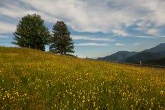 Carpathians mountain meadow Stock Photo