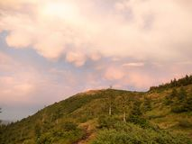 Carpathians mountains at summer, west Ukraine. Ukrainian wild nature landscape. Hillside covered with green firs and. Larch. Pink clouds in the sky. The sun stock photo