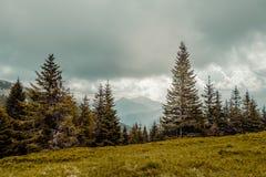 Carpathians mountains, Ukraine Stock Image