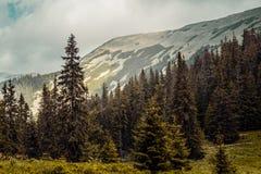 Carpathians mountains, Ukraine Royalty Free Stock Photos
