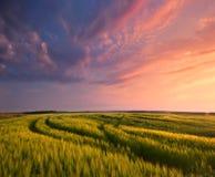 Autumn sunrise. Sunrise with clouds Royalty Free Stock Image