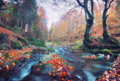 Elfs forest. Misty forest Royalty Free Stock Photo