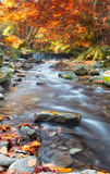 Carpathians nature. Autumn waterfall Stock Images