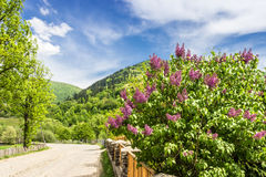 Carpathians. Road in mountains Royalty Free Stock Photography