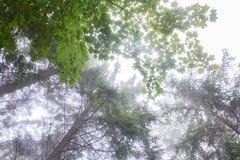 carpathians Silhuetas das árvores imagens de stock royalty free