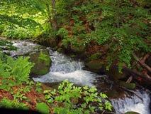 carpathians spadek Obrazy Royalty Free