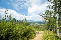 carpathians tempo ensolarado As montanhas Natureza suculenta fotografia de stock royalty free