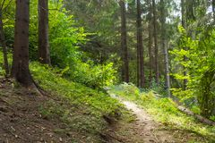 carpathians trajeto na floresta Foto de Stock