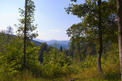 Carpathians Royalty Free Stock Image