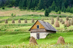 Carpathians. Ukrainian mountains. Summer landscape Stock Image