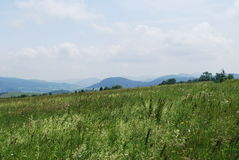 Carpathians. A warm summer day is in mountains Stock Image