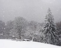 Carpathians in winter. Snowfall in the winter Carpathians Royalty Free Stock Image