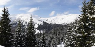 Carpathians in winter. Mount Sheshul, view from mountain valley Rohneska, Carpathians Stock Images