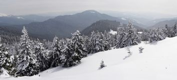 Carpathians in winter. Trees covered with snow on the slopes of the Carpathians Stock Photography