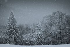 Carpathians in winter. Snowfall in the Carpathians, black-and-white version Royalty Free Stock Image