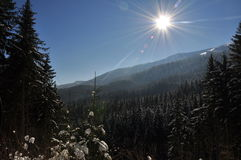 Carpathiansna Fotografering för Bildbyråer