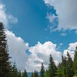 Carpathien le jour d'été photo libre de droits