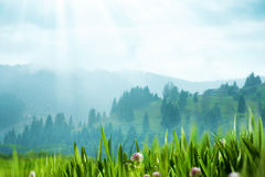 Carpatian valley with green hills Stock Image