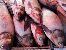 Carpe argentée sur la poissonnerie du Japon image libre de droits