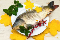 Carpe crue du plat blanc avec la feuille et la fleur d'automne Photos libres de droits