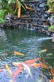 Carpe dans une nature d'étang Photographie stock