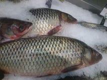 Carpe de poisson frais sur une étagère dans le magasin image libre de droits