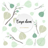 Carpe diem. Latin aphorism Royalty Free Stock Photo