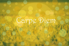 Carpe Diem Stock Images