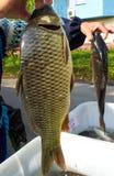 Carpe et x28 ; fish& x29 ; dans des mains A vendre Photos stock